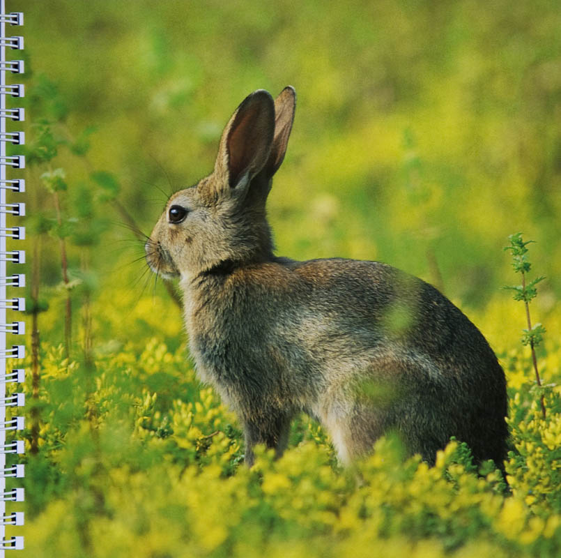 Groenreporters offers images of nature to illustrate diaries or annual reports.